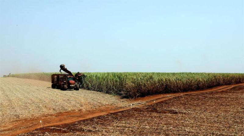 Covid-19:produtores rurais se preparam para diminuir riscos