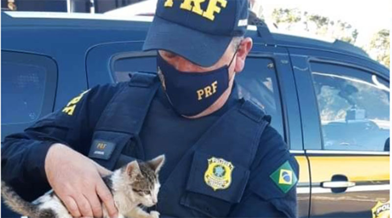Motorista é detido por arremessar gato pela janela de carro na BR-116 em SC