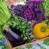 Dia Mundial da Alimentação terá orientação nutricional gratuita em Imperatriz